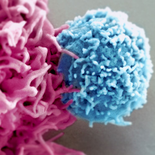 Dendritic-cell
